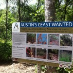 Restoring Blunn Creek Nature Preserve.