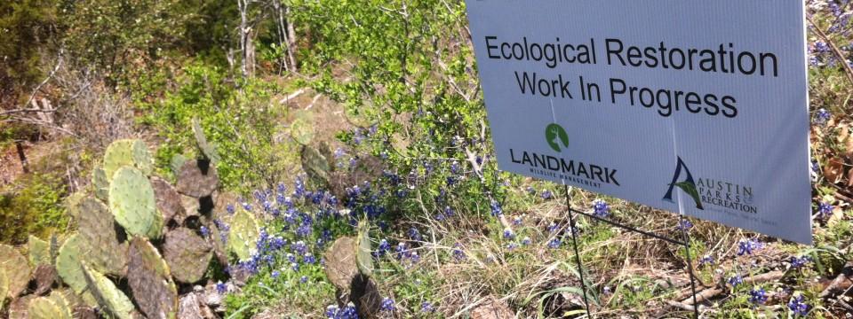 Blunn Creek Nature Preserve Restoration Project
