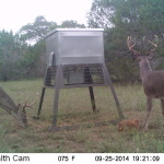 Deer Surveys