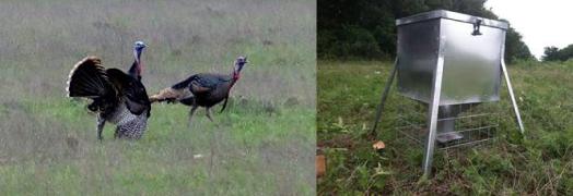 Supplemental Food for Wildlife: Feeders and Food Plots