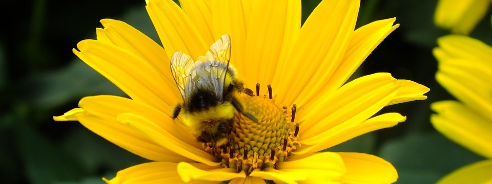 Bees and Texas Wildlife Management (It's All the Buzz)